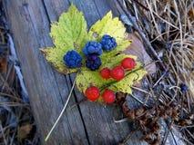 Lasowe jagody na kolor żółty spadać prześcieradle Fotografia Stock