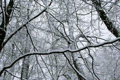 lasowe linie śnieg Fotografia Stock