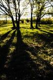 Lasowe muldy Obrazy Stock