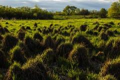 Lasowe muldy Obraz Stock