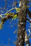 Lasowe orchidee Zdjęcia Stock