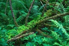 Lasowe rośliny środkowy zespół Zielony Kolor Obrazy Royalty Free