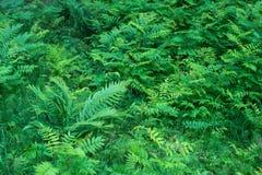 Lasowe rośliny środkowy zespół Zielony Kolor Obrazy Stock