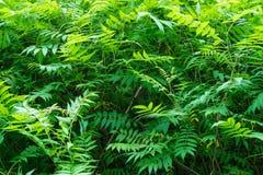 Lasowe rośliny środkowy zespół Zielony Kolor Zdjęcie Royalty Free