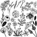 Lasowe rośliny obrazy stock