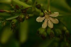 Lasowe rośliny Zdjęcia Royalty Free