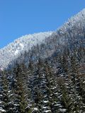Lasowe warstwy Fotografia Royalty Free