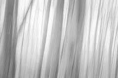 Lasowego abstrakta zamazany tło Obraz Royalty Free