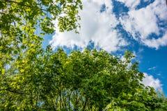 Lasowego drzewa lato Zdjęcie Royalty Free