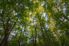Lasowego drzewa ulistnienie Północny Illinois fotografia stock