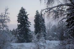 Lasowego drzewa zimy śnieg fotografia royalty free