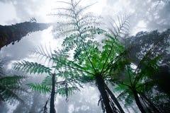 lasowego kinabalu mglista góry góra Obrazy Royalty Free