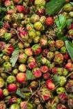 Lasowego lata truskawek jagod czerwony dziki słodki tło makro- Obrazy Stock