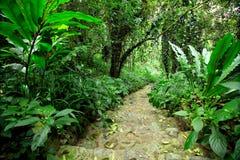 Lasowej ścieżki droga fotografia royalty free