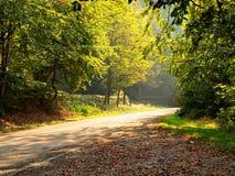 Lasowej drogi i jesieni słońca promienie zdjęcie stock