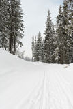 lasowej drogi zima Zdjęcia Stock