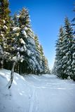 lasowej drogi zima obraz stock