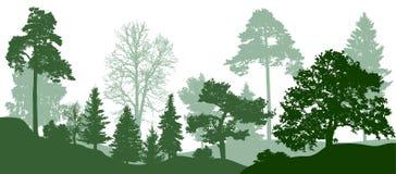 Lasowej zieleni drzew sylwetka Natura, park Wektorowy tło ilustracja wektor