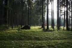 lasowej zieleni drzewa Obraz Stock