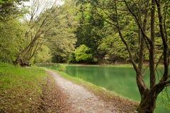 lasowej zieleni jeziora sceneria Fotografia Royalty Free