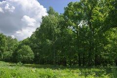 lasowej zieleni lato obrazy royalty free