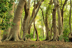 lasowej zieleni magia Zdjęcie Stock