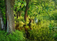 lasowej zieleni natura Fotografia Royalty Free