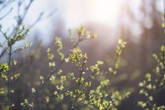 lasowej zieleni wiosna Zdjęcia Royalty Free