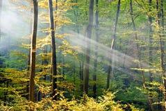 lasowi światła Fotografia Royalty Free
