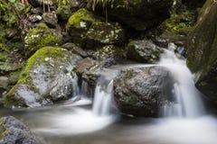 Lasowi Dźwięki obrazy royalty free