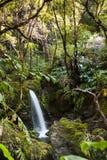 Lasowi Dźwięki obrazy stock