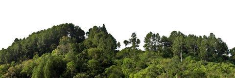 lasowi drzewa Zdjęcie Royalty Free