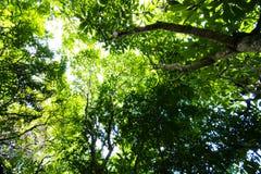 Lasowi drzewa Fotografia Royalty Free