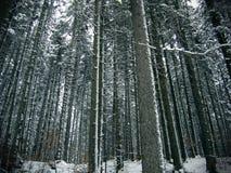 Lasowi drzewa zdjęcia stock