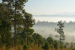 Lasowi drzewa i mgła fotografia royalty free