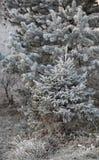 Lasowi drzewa w hoarfrost Zdjęcia Stock