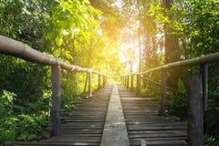 Lasowi drzewa z natura śladem w Tajlandia Obraz Stock