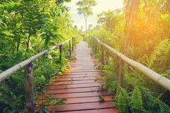 Lasowi drzewa z natura śladem w Tajlandia Zdjęcie Stock