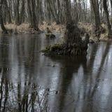 Lasowi gąszcze Reliktowy las, olchowa czerwień Zdjęcie Royalty Free