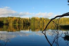 Lasowi i starzy drzewa pod niebieskim niebem na brzeg jezioro Obrazy Stock