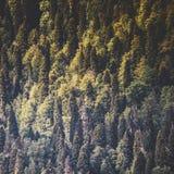 Lasowi jesieni drzewa zdjęcia royalty free