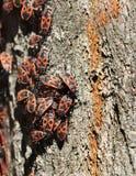 Lasowi karakany na barkentynie drzewo zdjęcia royalty free