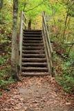 lasowi kroki Obrazy Stock