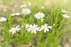 Lasowi kwiaty Obrazy Stock