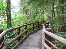 Lasowi ślada Zdjęcia Royalty Free