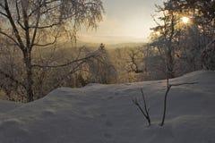 lasowi mopsy Fotografia Royalty Free