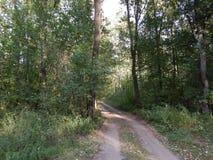 Lasowi natura ślada Obraz Stock