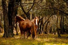 lasowi nowi koniki Obraz Stock