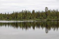Lasowi odbicia Zdjęcie Royalty Free