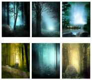 Lasowi sen Zdjęcia Royalty Free